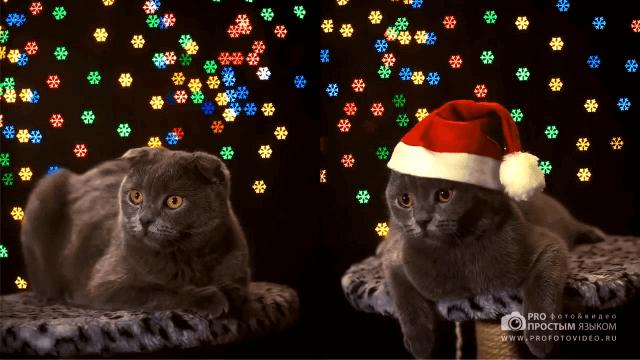 Новогоднее фигурное Боке