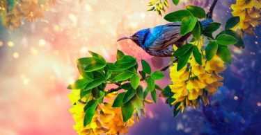 Коллаж с птицей